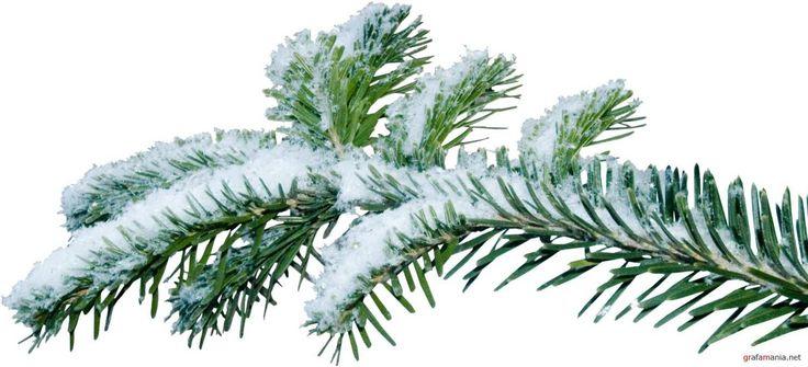 Christmas Tree Branch Png | kanyagiftcenter.com | Camo | Pinterest ...