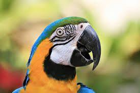 Kuvahaun tulos haulle birds