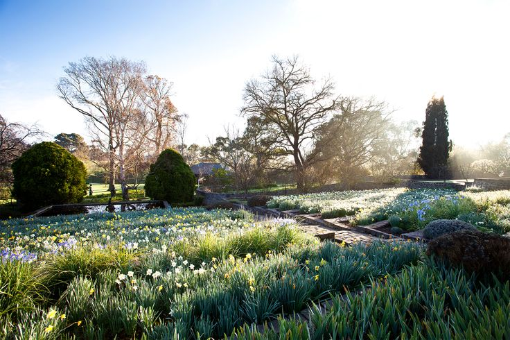 Historic garden with daffodils in country Victoria. Photography: Claire Takacs | Story: Australian House & Garden