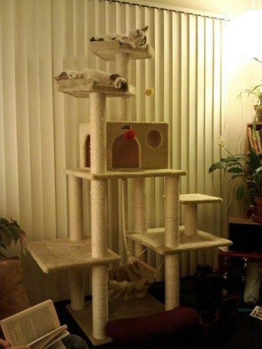 Make Your Own Cat Trees, Towers, and other Cat Structures