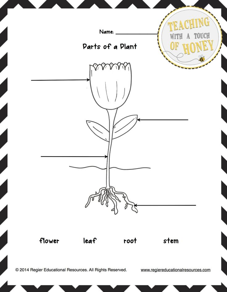 Freebie Label The Plant Tiered Templates Classroom