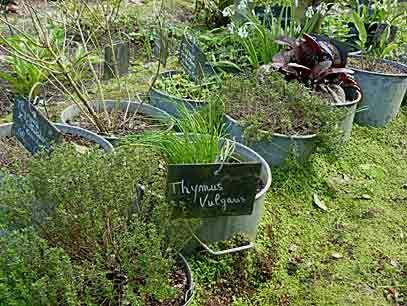 Un petit coin d'aromatiques dans des bassines en zinc  Herbes ...