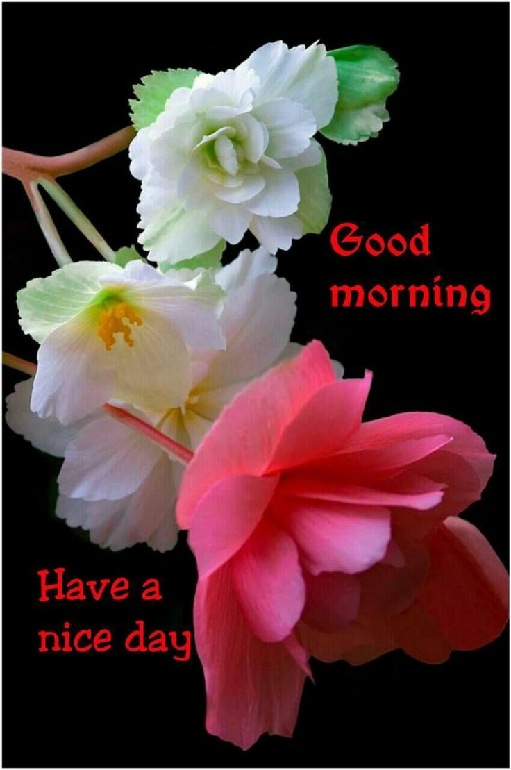 Good Morning beautiful friends... Hope your day beings with lot of love. ...,  - Krishna Roy - Google+