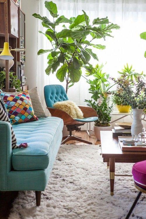 Mid-century living room, turquoise sofa, chair, fiddle leaf indoor tree