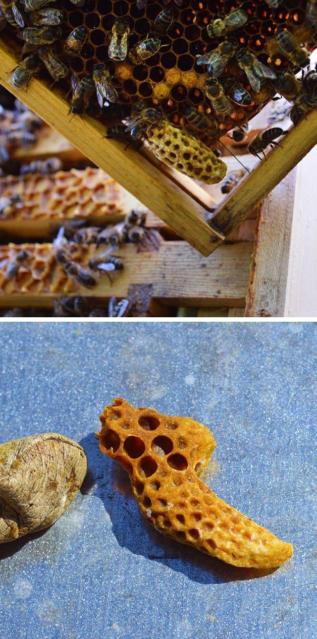 swarming season and brood and a half bienen imker und honig. Black Bedroom Furniture Sets. Home Design Ideas