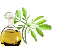 Image result for moringa for cosmetic use