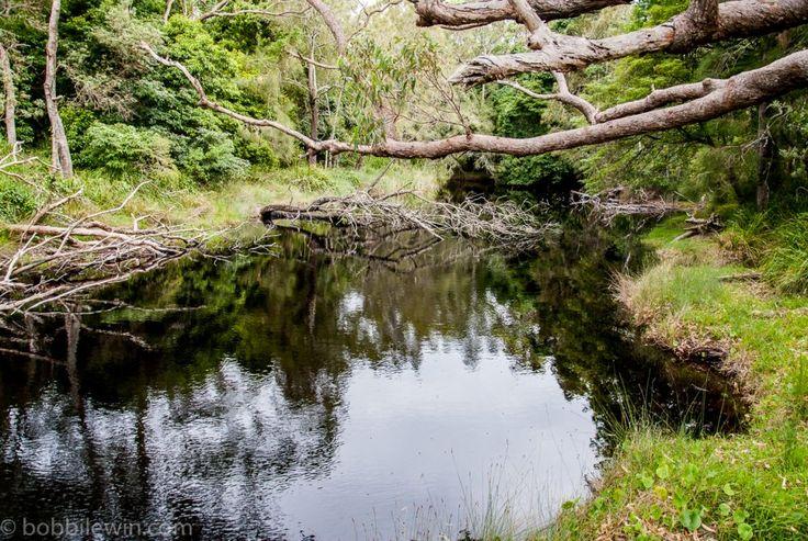 Black river at Abrahams Bosom Reserve