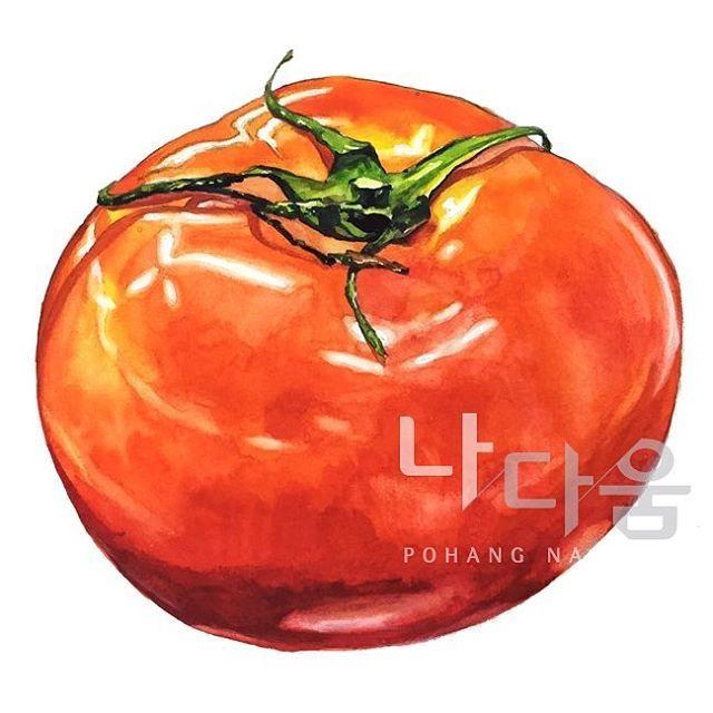 토마토 개체묘사