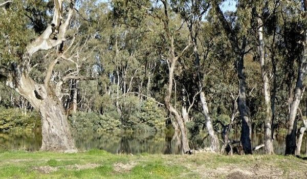 Absolute Murray River frontage home building sites for sale.