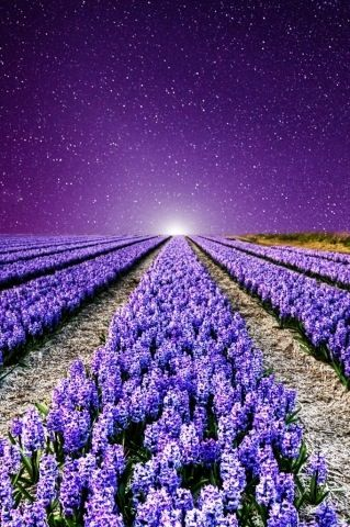 Lavender Fields at night...France