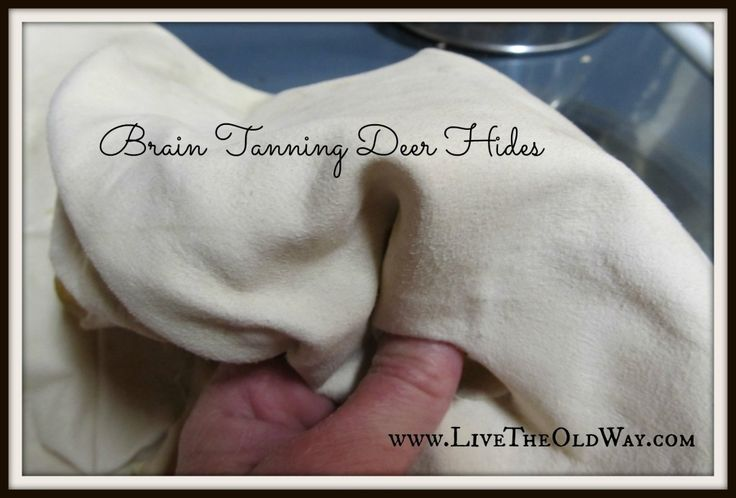 Step by step instructions for tanning deer hides with either brains or eggs.