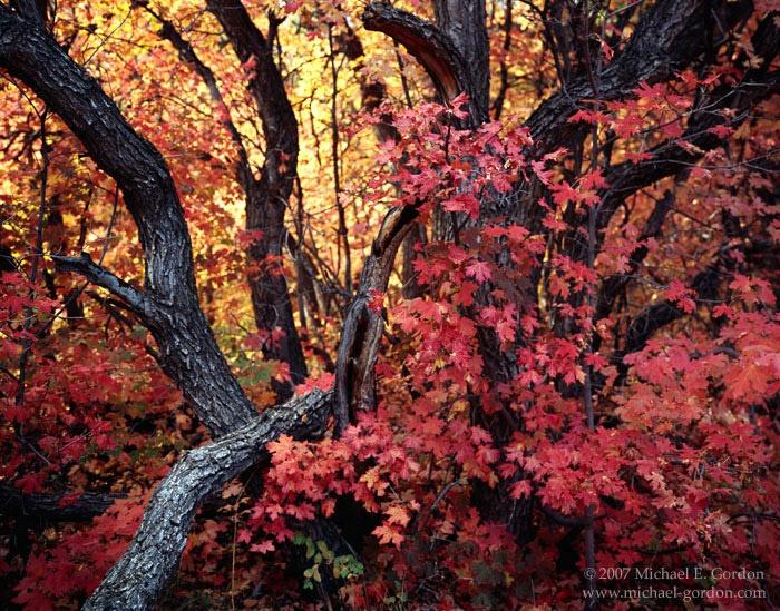 I love Fall in Utah