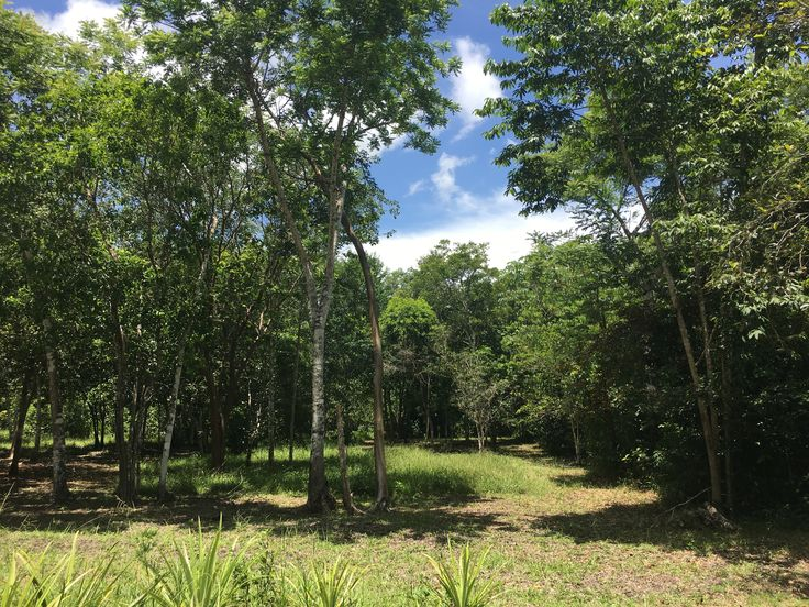 We're thrilled to list for sale this beautiful 150 acre property of lush jungle with two creeks in Yalbac, near Spanish Lookout, Belize.