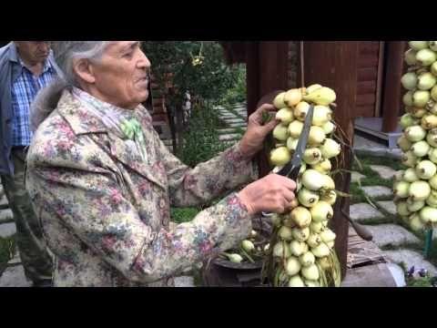 Древний и простой способ хранения лука в плетенице - YouTube