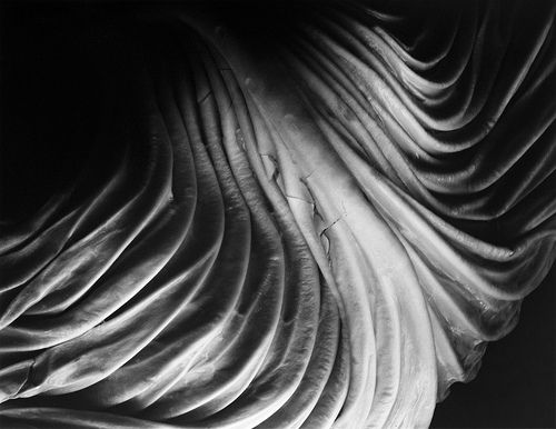 Cabbage Leaf. Photograph by Edward Weston (1931) - Weston has given this vegetable a sort of personality and I find it's quite an interesting piece to look at as you don't necessarily see a cabbage leaf in it until you are told.
