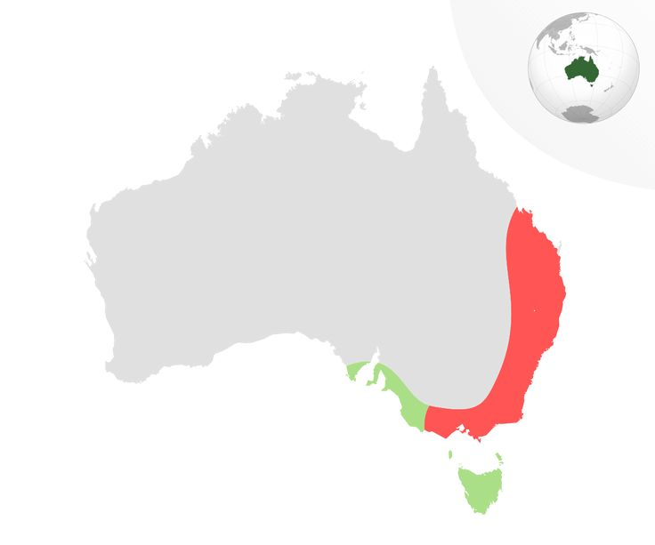 Distribution map of the Yellow-tailed Black Cockatoo (Calyptorhynchus funereus) showing range of the two recognised subspecies: C. (Z.) f. xanthanotus in green and C. (Z.) f. funereus in red