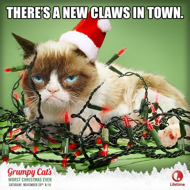 The Official Grumpy Cat™ Tumblr