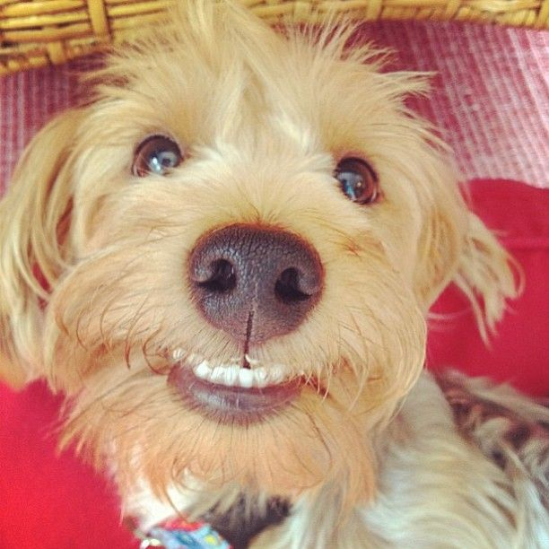 This former Pet of the Week made us smile! #BHGPets (Shared by laurinashley15)