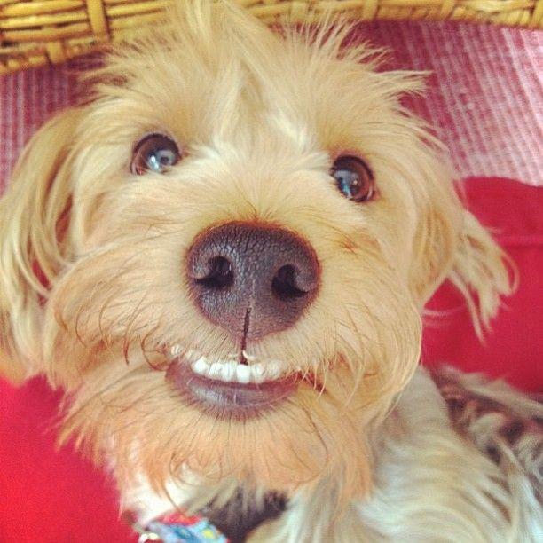 Olha o meu sorriso