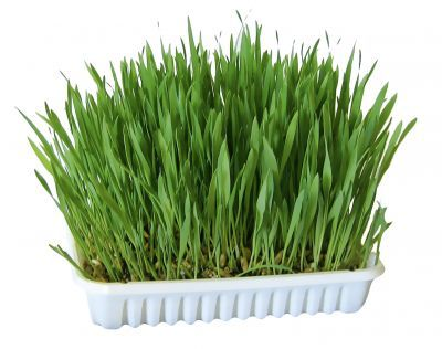 Zooplus Nibble Grass for Rabbits and Guinea Pigs