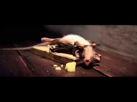 Самая смешная реклама сыра (Мышь качается в мышеловке) - YouTube