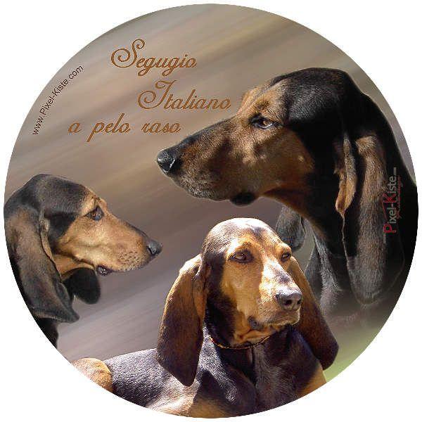 foto autoaufkleber hund bis 16 cm autoaufkleber tiere hunde auto aufkleber hunde und aufkleber. Black Bedroom Furniture Sets. Home Design Ideas