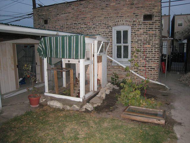 How to be a (Suburban or Urban) Homesteader | The Prairie Homestead