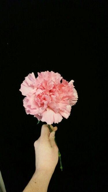 Lys rosa