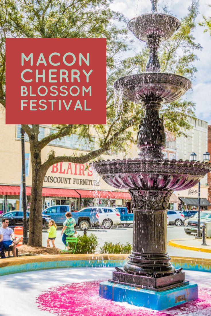 """A visit to Macon, Ga. for the Cherry Blossom Festival, known as the """"Pinkest Party on Earth!"""" Activities include amusement rides, a parade and much more!"""