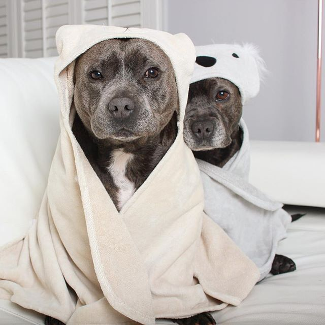 Pin for Later: It's a Nonstop Pajama Party For These Puppy Brothers