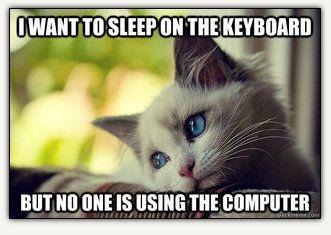 106 Best Images About Cat Memes On Pinterest Cats Cat