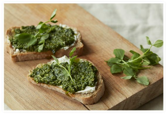 pea shoot pesto with lemon ricotta toast