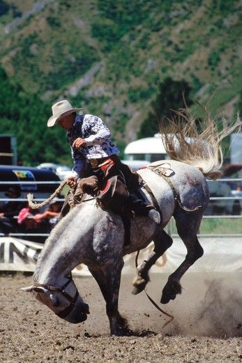 Cowboy riding white bronco in rodeo