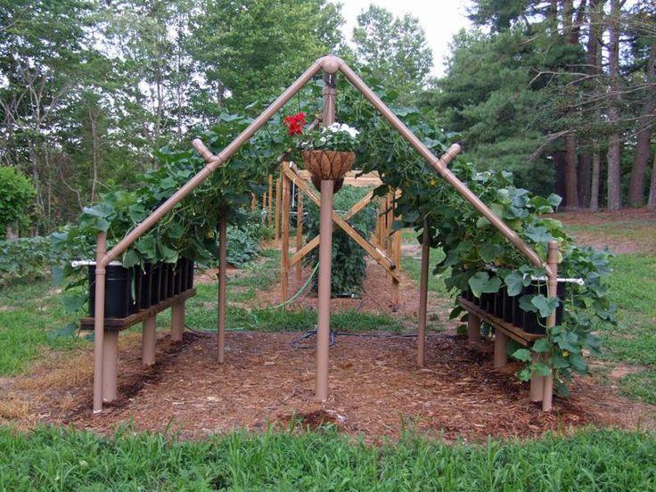 Build a PVC cucumber/vine trellis