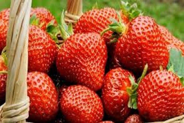 7 стъпки до отглеждането на божествено вкусни ягоди! (2)