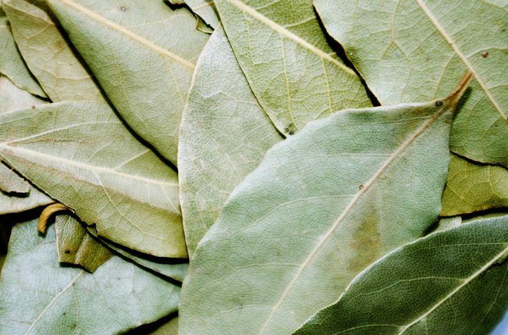 Účinný přírodní lék proti kašli si vyrobíte z bobkového listu