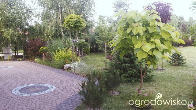 Ogród tworzony z pasją - strona 1014 - Forum ogrodnicze - Ogrodowisko