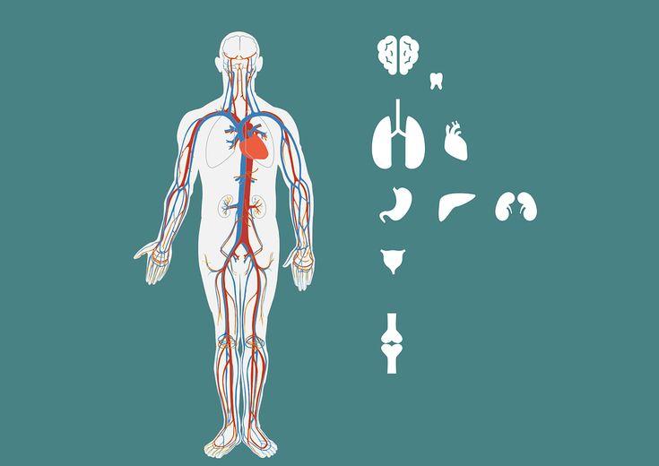 Jestliže orgán v našem těle nefunguje tak, jak má, je ohrožen náš celkový zdravotní stav. Stejné je to i u ledvin.