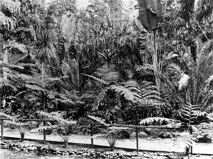 Fern Island in the Botanic Gardens, Brisbane, Queensland, ca. 1878