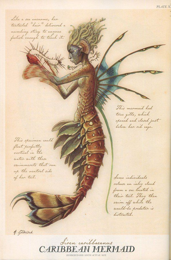 Caribbean mermaid                                                                                                                                                                                 Plus