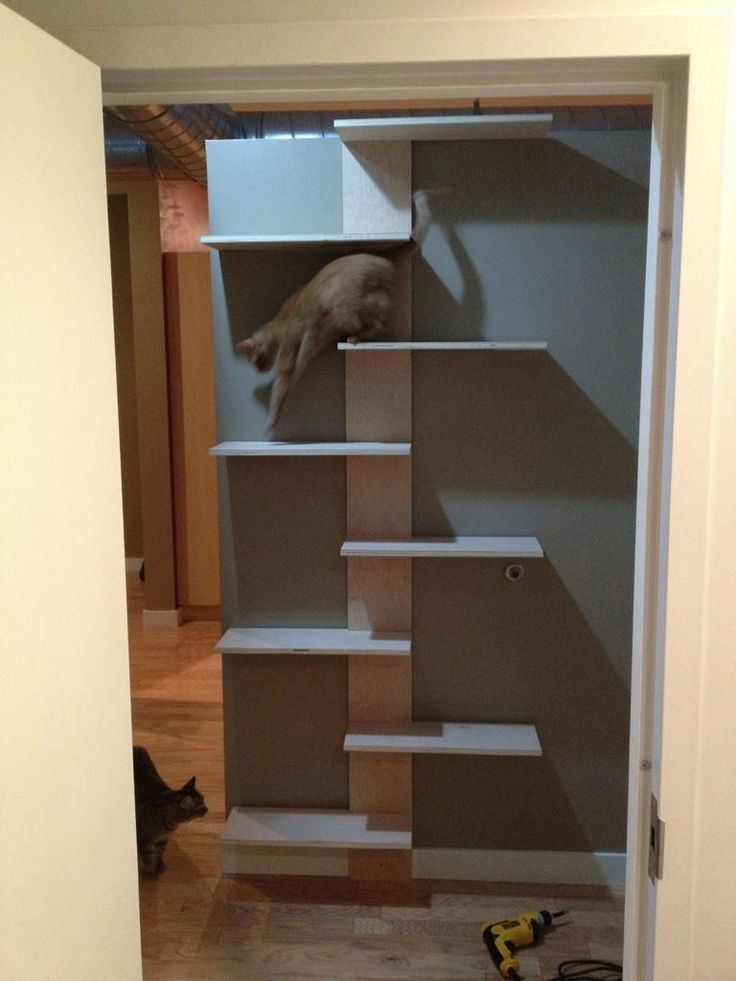 Best 25 cat perch ideas on pinterest cat climbing for Bookshelf cat tower