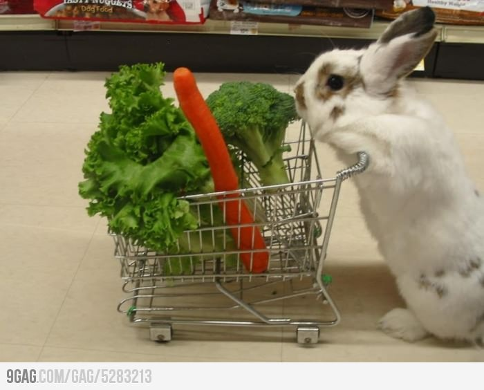 Daily grocery list: Funny Bunnies, Rabbitfood, Rabbit Food, So Cute, Cute Bunnies, Shops Carts, Eating Healthy, Grocery Stores, Cutest Things Ever