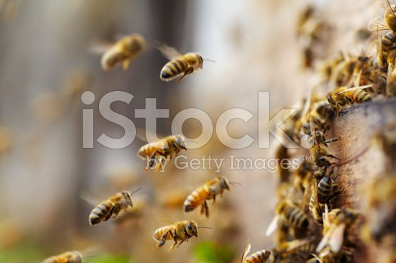 bees flying royalty-free stock photo