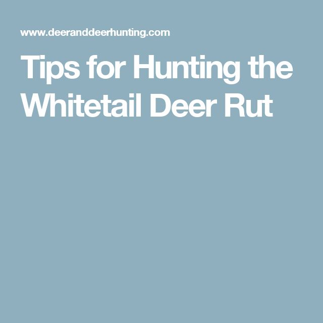 Tips for Hunting the Whitetail Deer Rut