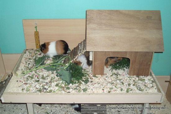 Meerschweinchen-Stall Eigenbau: Aufbau mit Bergluft