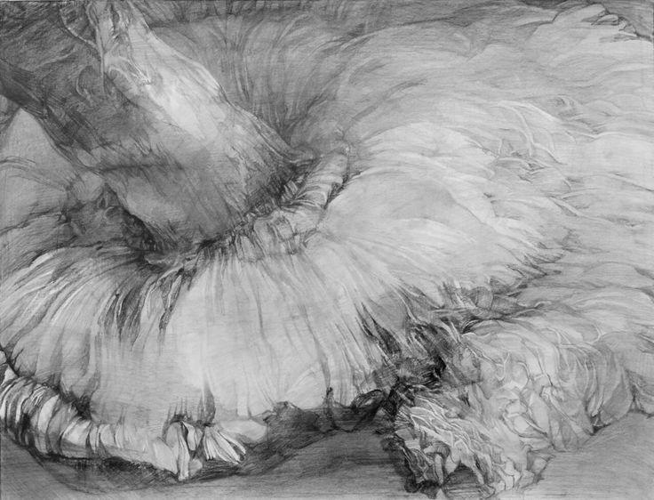 2013/a pencil drawing/monochrome/a shiitake mushroom