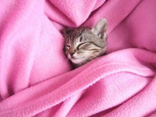 Aw <3: Cats, Kitty Cat, Sweet, Adorable Animals, Cat Nap, Pink, Kittens, Kitties