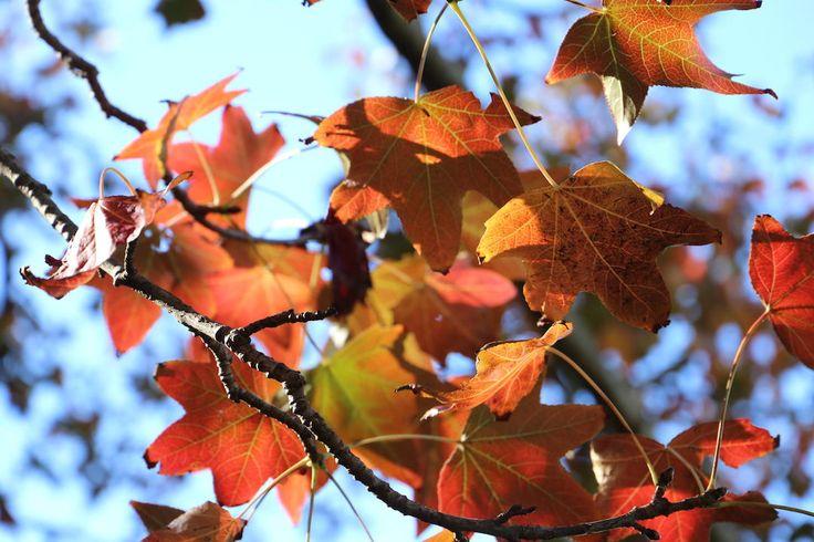 Melbourne date ideas, Autumn leaves, Australia