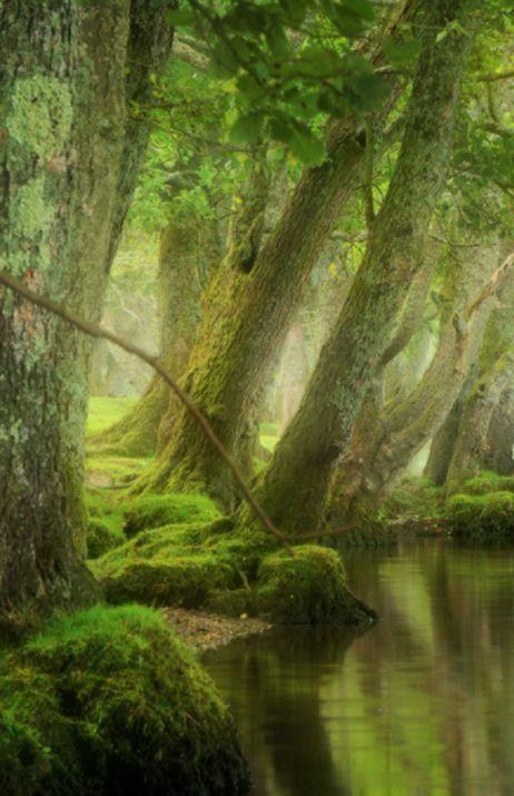 33 best secret pathways images on pinterest nature for Garden trees scotland