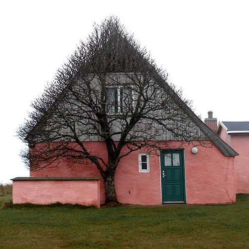 """""""This old, pink house is situated at the old dunes, a few hundred meters from the west coast, a very windy place where there isn'tmuch that can grow.  So the tree has grown where it had shelter.  It has looked this way always.  No people, only nature involved."""""""